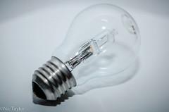 light bulb Nic Taylor